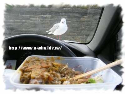 【NewZealand紐西蘭打工度假日記】遇上KEA啄羊鸚鵡~可愛逗趣的貪吃鸚鵡!